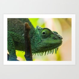 Up Close and Personal with a Chameleon Art Print