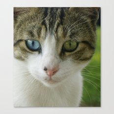 Two beautiful eyes Canvas Print