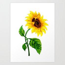 Summer Spring Sunflower Art Print