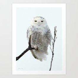 Snowy in the Wind (Snowy Owl) Art Print