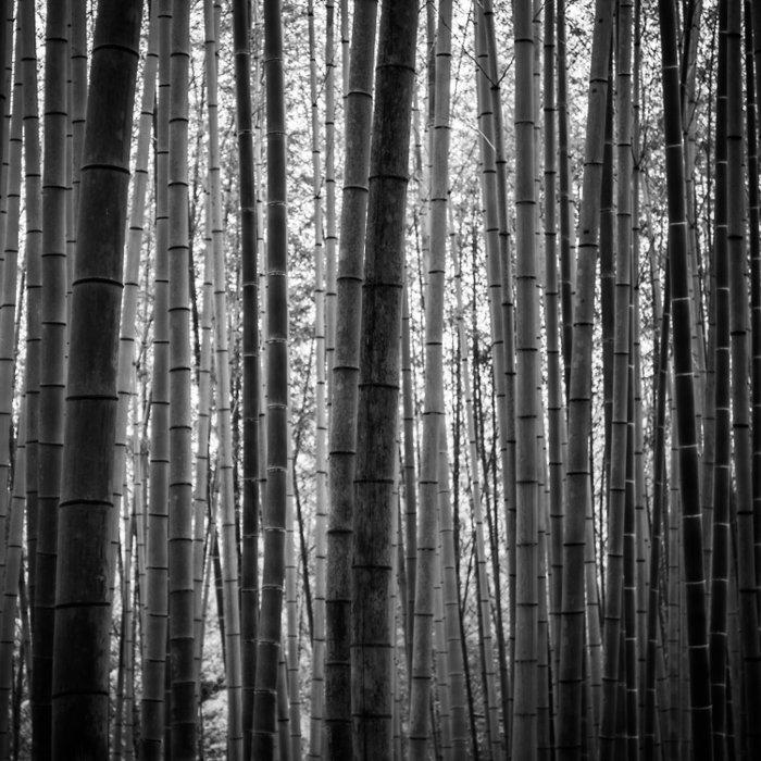 Bamboo Monochrome Duvet Cover