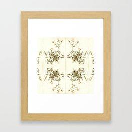 gypsophila repens Framed Art Print