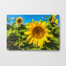 Here Comes the Sun - Giant Sunflower on Sunny Day in Kansas Metal Print