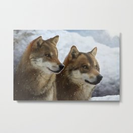 Twin Wolves Metal Print