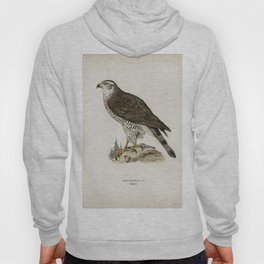 Goshawk female (Accipiter gentilis) illustrated by the von Wright brothers Hoody