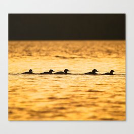 Birds Swimming At Sunset Reflection On The Lake #decor #society6 Canvas Print