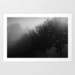 Trees in the Mist (1) Art Print