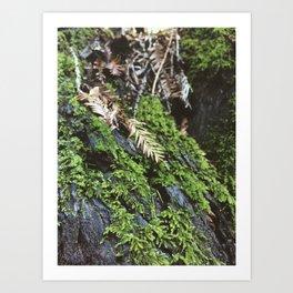 Green Texture Art Print