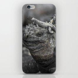 Galapagos marine iguana iPhone Skin