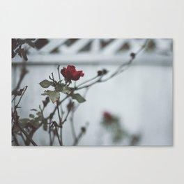 Winter Rose Canvas Print