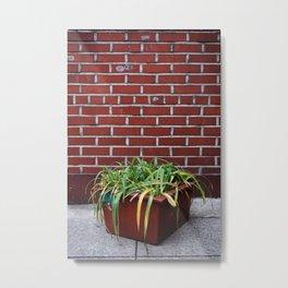 Brick Plant Metal Print
