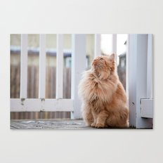 Here kitty Canvas Print