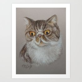 Exotic Cat Portrait Tabby Cat Pastel drawing Sketch on grey background Decor for Cat Lover Art Print
