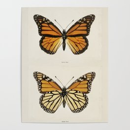 Monarch Butterfly Vintage Poster