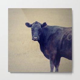 Looking Cow Metal Print