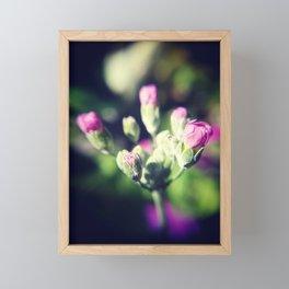 Primula Buds Framed Mini Art Print