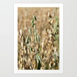 one green oat Art Print