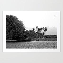 Palm Trees Molokai Art Print