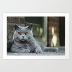 Diesel the cat ! Art Print