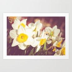 Daffodil flower Art Print