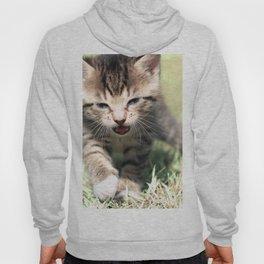 Katze, Cat Hoody