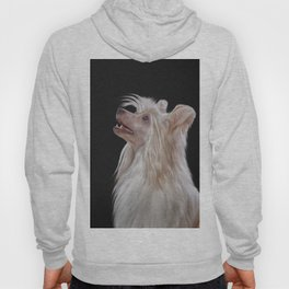 Drawing, illustration Chinese crested dog Hoody