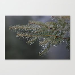 Real mountain dew Canvas Print