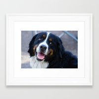puppy Framed Art Prints featuring Puppy by SachelleJuliaPhotography