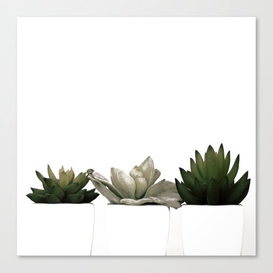Lovely green cactus - cacti in white pots on a white background Canvas Print