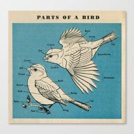 Parts of a Bird Canvas Print