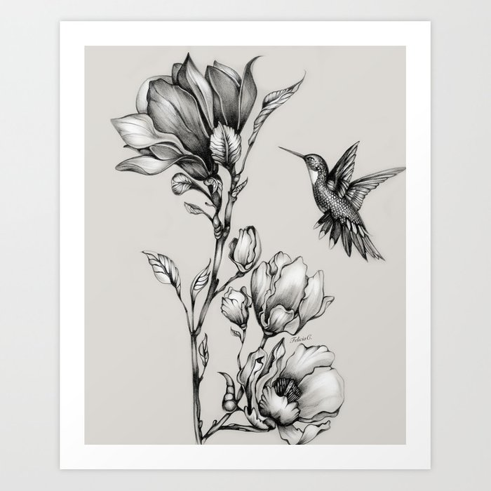Magnolia Flower and Hummingbird Art Print