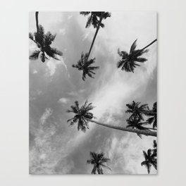 Palm Trees Photography Black and White Canvas Print