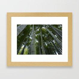 Bambu forest Framed Art Print