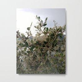 mountain mahogany Metal Print