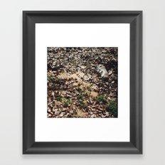 Dead Rabbit Framed Art Print