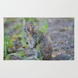 ground squirrel greeting Rug