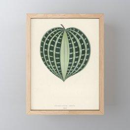 Seersucker Plant (Dichorisandra Undata) engraved by Benjamin Fawcett (1808-1893) for Shirley Hibberd Framed Mini Art Print
