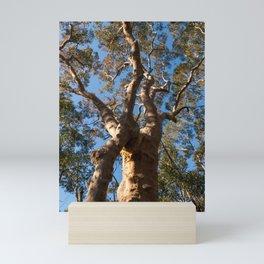 Scribbly Gum Tree Mini Art Print