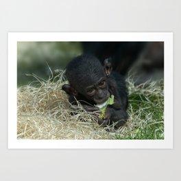Cheeky Bonobo Baby Art Print