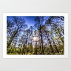 The Spring Forest View Art Print