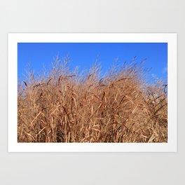 Autumn Grasses Under a Clear Blue Sky Art Print