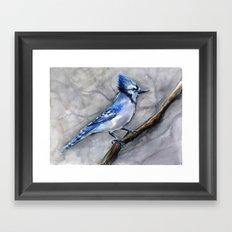 Blue Jay Watercolor Bird Framed Art Print