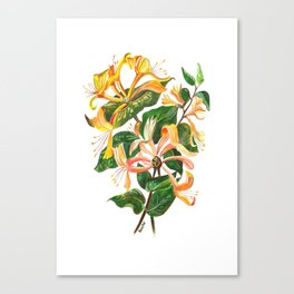 Honeysuckle Bouquet Canvas Print
