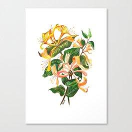 Honeysuckle Bouquet Canvas Print