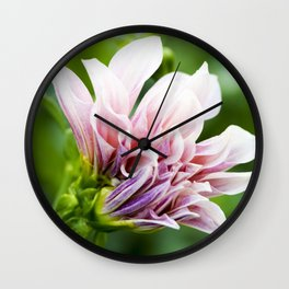Cafe Au Lait Dahlia in Bloom Wall Clock