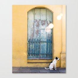 Waiting White Dog Canvas Print