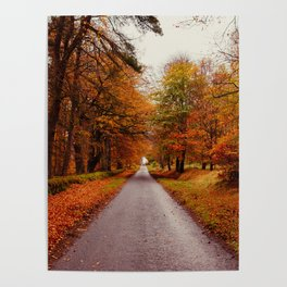 Autumn Road II Poster