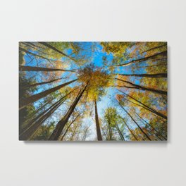 Kaleidoscope - Fall Colors in Trees of Great Smoky Mountains Metal Print