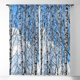 Birch Trees. Early Spring Blackout Curtain