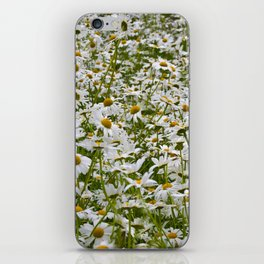 White and Yellow Daisies iPhone Skin